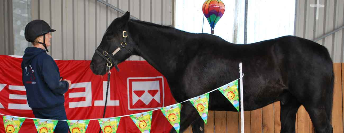 Build Your Own Horse Agility course
